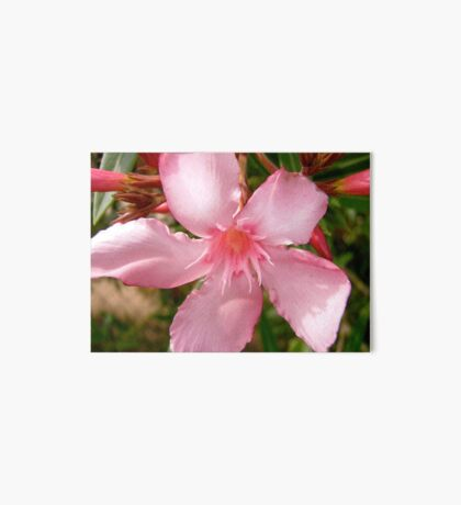 Pink Oleander Art Board
