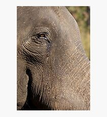 Indian Elephant Photographic Print