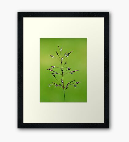 Fairyland Framed Print