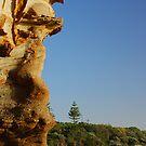 Lone Pine - Caves Beach by Bev Woodman