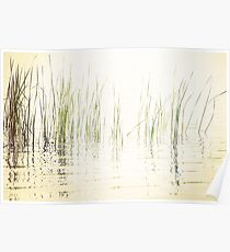 Reeds in Peaceful Lake Poster