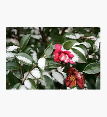 Flower in the Snow Photographic Print