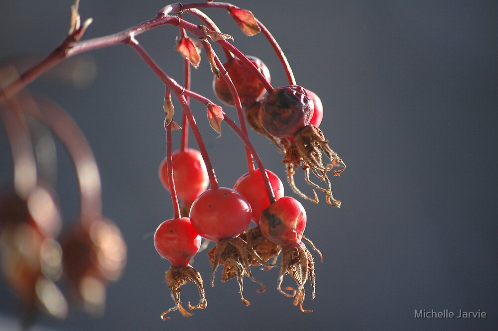 Rose Hips by Michelle Jarvie