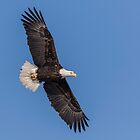 Bald Eagle 2018-1 by Thomas Young