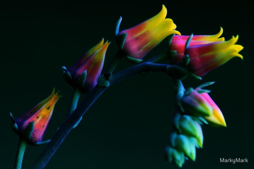 Rainbow Flow by MarkyMark