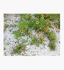 Beautiful Yellow Wildflowers Photographic Print