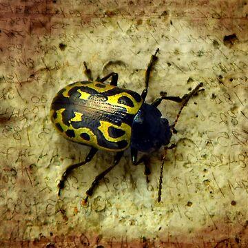 ©NS Beetle Message IA. by OmarHernandez