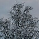 frosty snowfall by memaggie