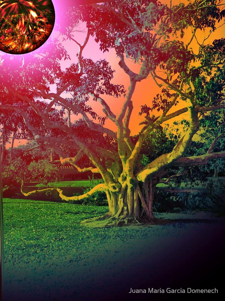 The Sun and The Tree by Juana Maria Garcia Domenech