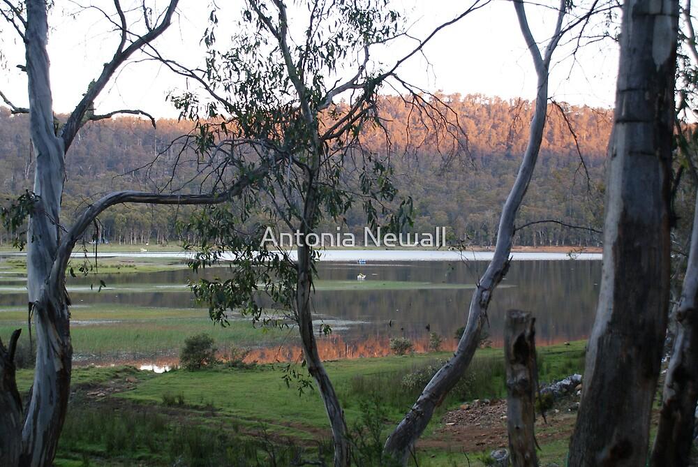 Dusk at Pine Tier Lagoon,Tasmania. by Antonia Newall