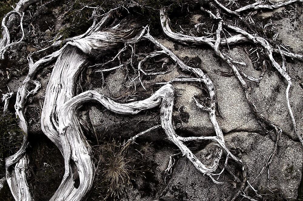 Tree Roots, Walls of Jerusalem by Michael Morffew