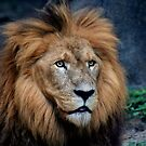 Majestic Lion by Savannah Gibbs