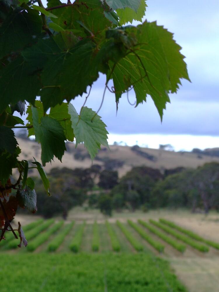 view to vineyard by Rebekah  Girolamo
