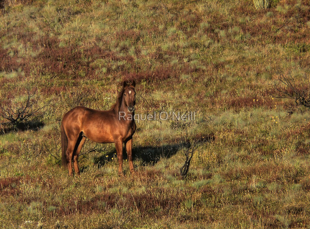 Yet Another Brumby Shot by Raquel O'Neill