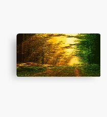 Picture 2015063 Justin Beck sunset in the Forest Canvas Print