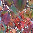 Red leaves # 3 by Daniela Cifarelli
