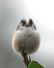 Long-tailed Tit by Neil Bygrave (NATURELENS)