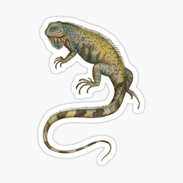 Iguana Tropical Lizard Pet Iguana Lover Sticker