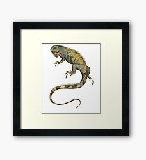 Iguana Tropical Lizard Pet Iguana Lover Framed Print
