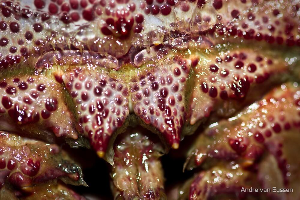 Bug! by Andre van Eyssen
