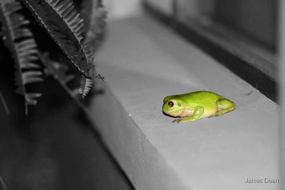 Green Tree Frog. by James Dean