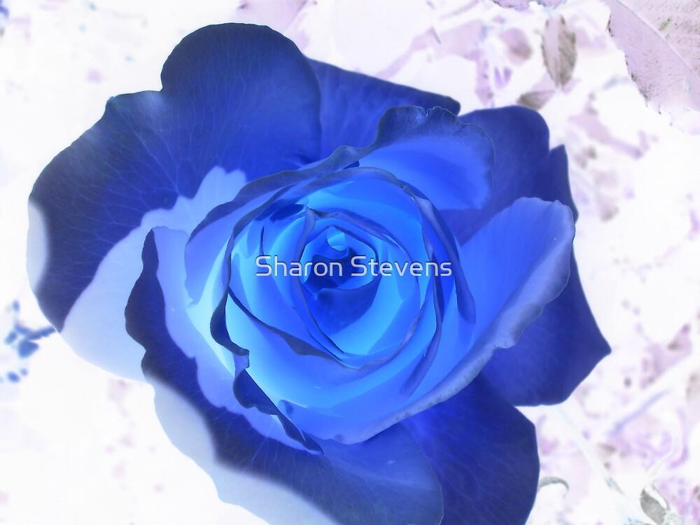Blue Veined Rose by Sharon Stevens