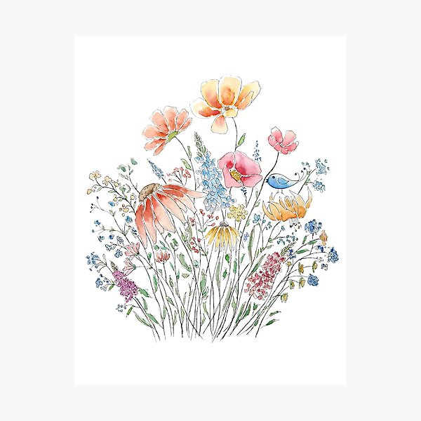 wild flower bouquet and blue bird-line and watercolor 2 Photographic Print