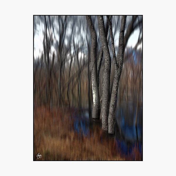Spring Colors in a Floodplain Forest Photographic Print