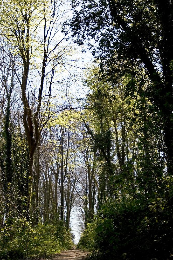 Woods 2 by hellsbell