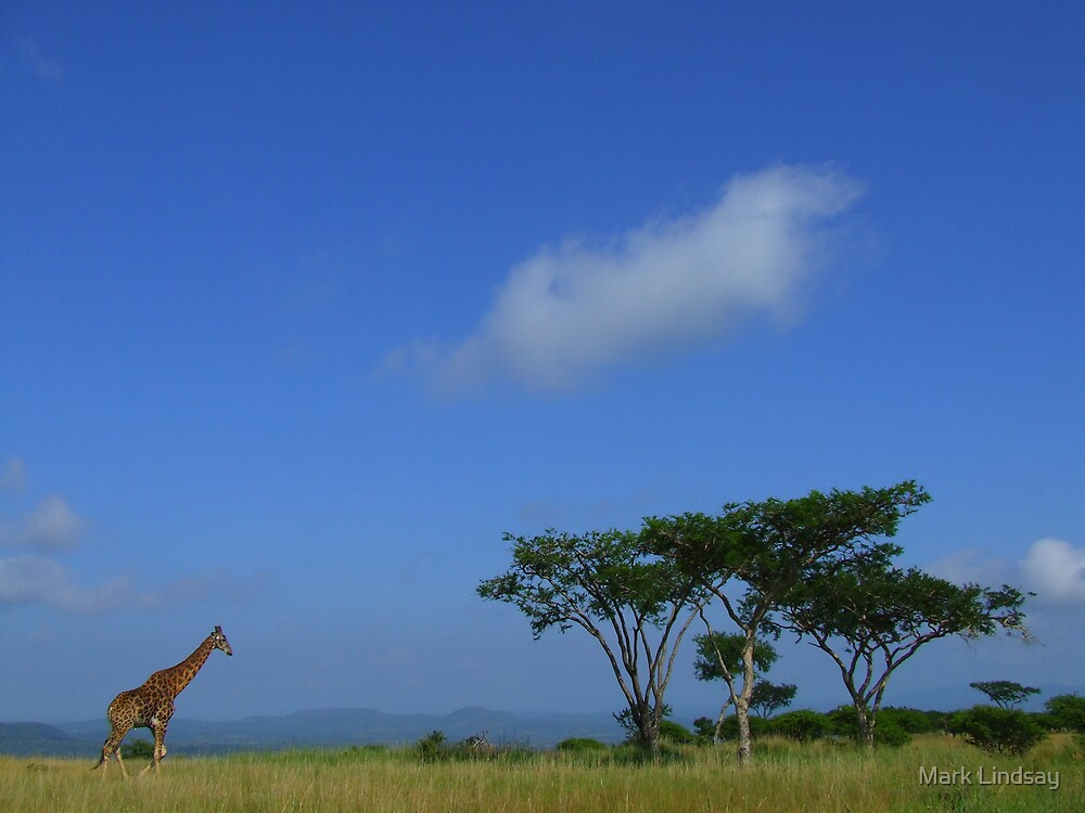 Lone giraffe by Mark Lindsay