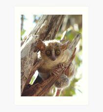 Mouse Lemur Art Print