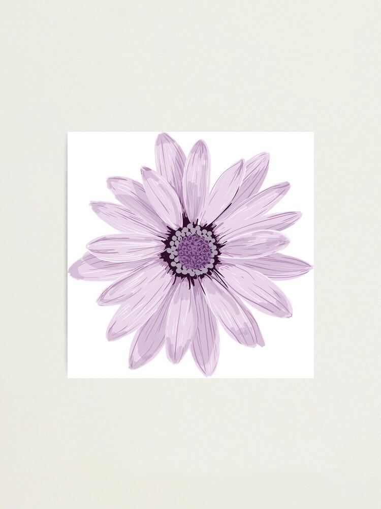 Alternate view of Purple Daisy Photographic Print