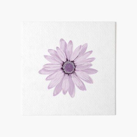 Purple Daisy Art Board Print