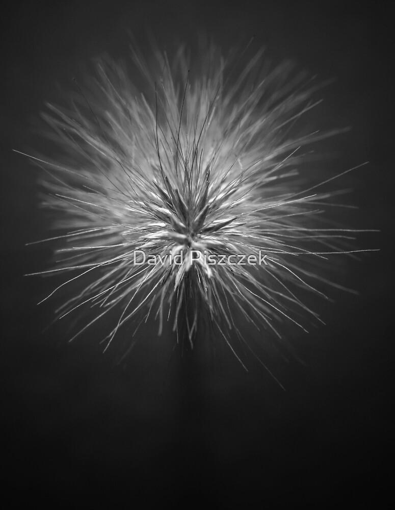 Focus by David Piszczek