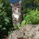 Tabby cat in overgrown garden by turniptowers