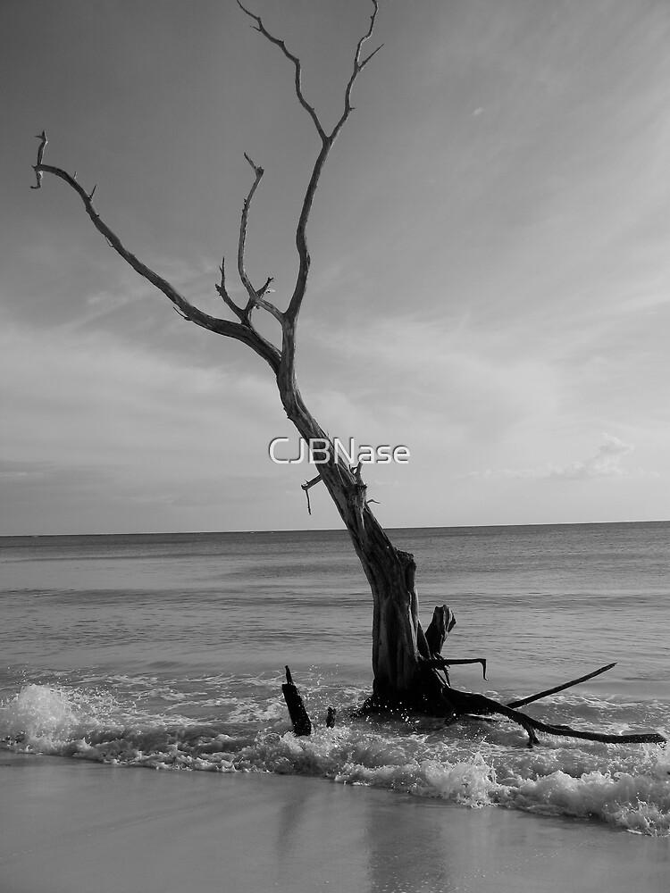 Jamaican Drift by CJBNase