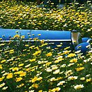 Pushing up daisies by George Parapadakis (monocotylidono)