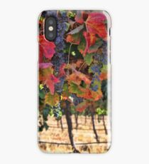 Wine Country Fall Colors Harvest Vineyard Grapes and Vines iPhone Case