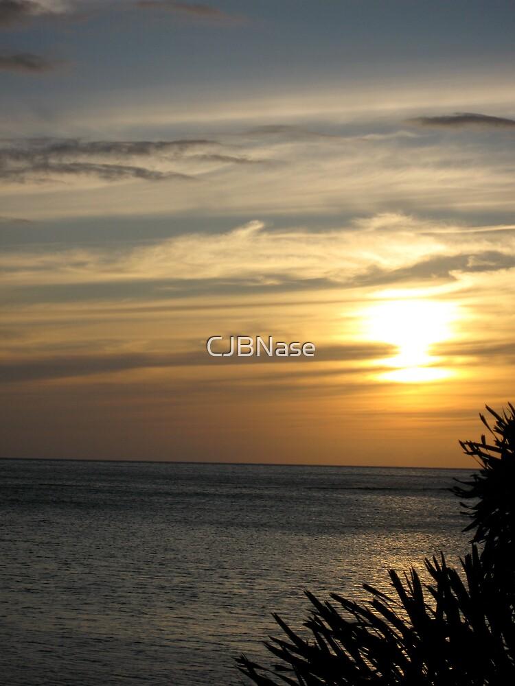 Palm Sunset by CJBNase
