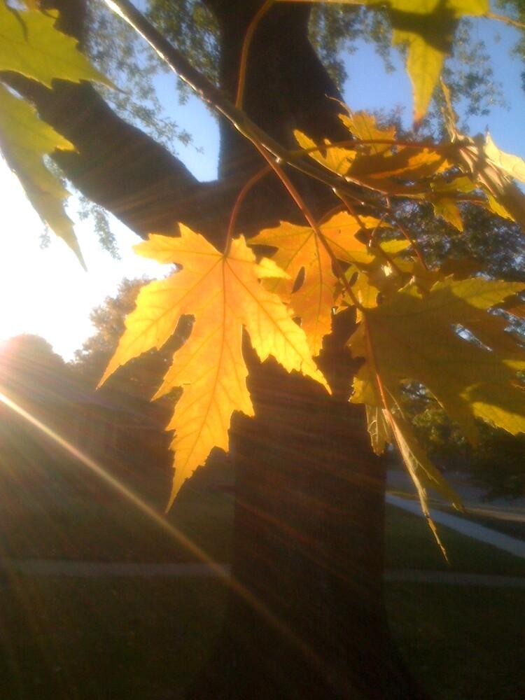 Yellow Fall Sun by 2004200775