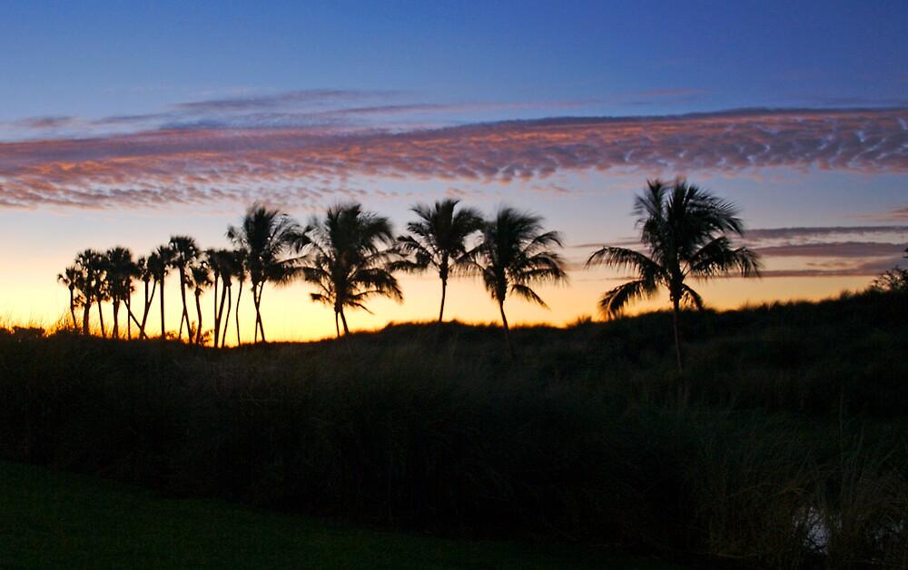 sun rise palms by Sol Whiteley
