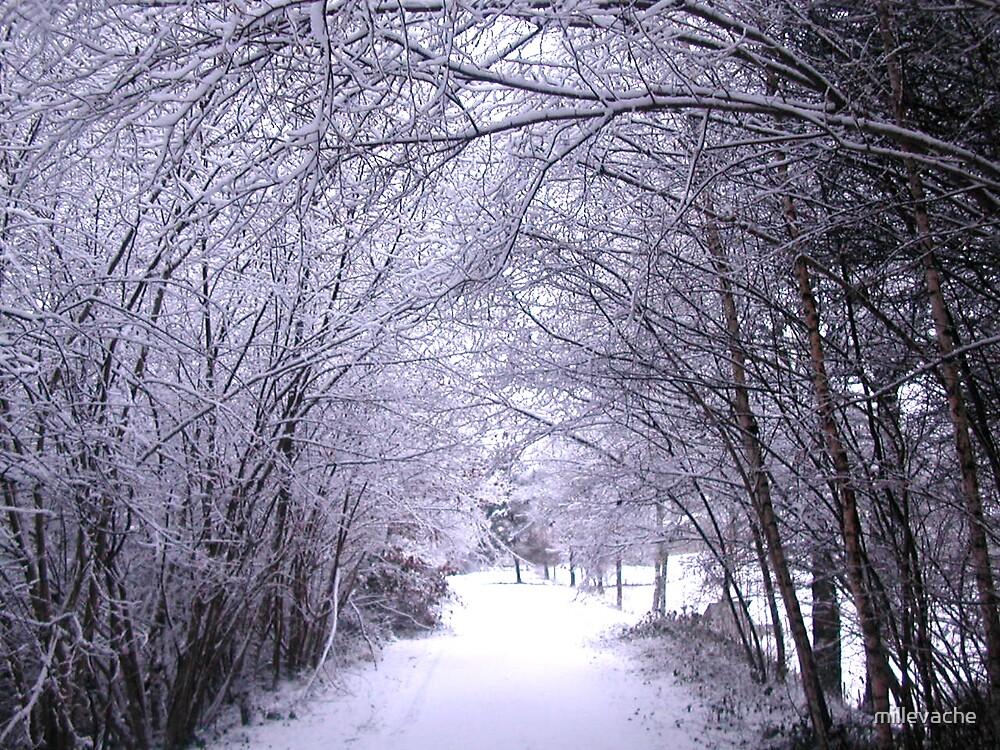 Snow #3 by millevache
