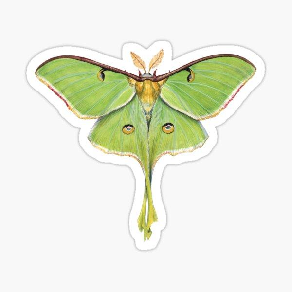 Luna Moth (Actias luna) II Sticker