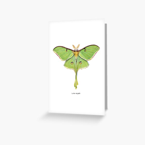 Luna Moth (Actias luna) II Tarjetas de felicitación