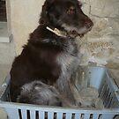 Rox in a Box by joconti