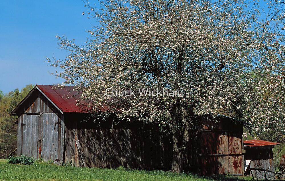 APPLE TREE, PIGEON FORGE TN. by Chuck Wickham
