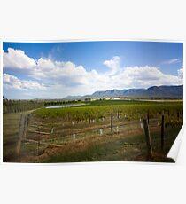Vineyard - Watagan, NSW Poster