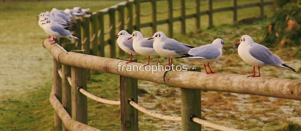 I Don`t Want My Photo Taken! by Franco De Luca Calce