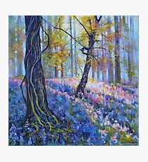 Brierfield Bluebells Photographic Print