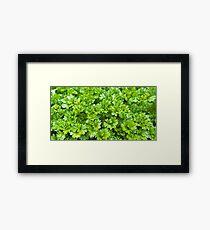 Green parsley herb pattern Framed Print